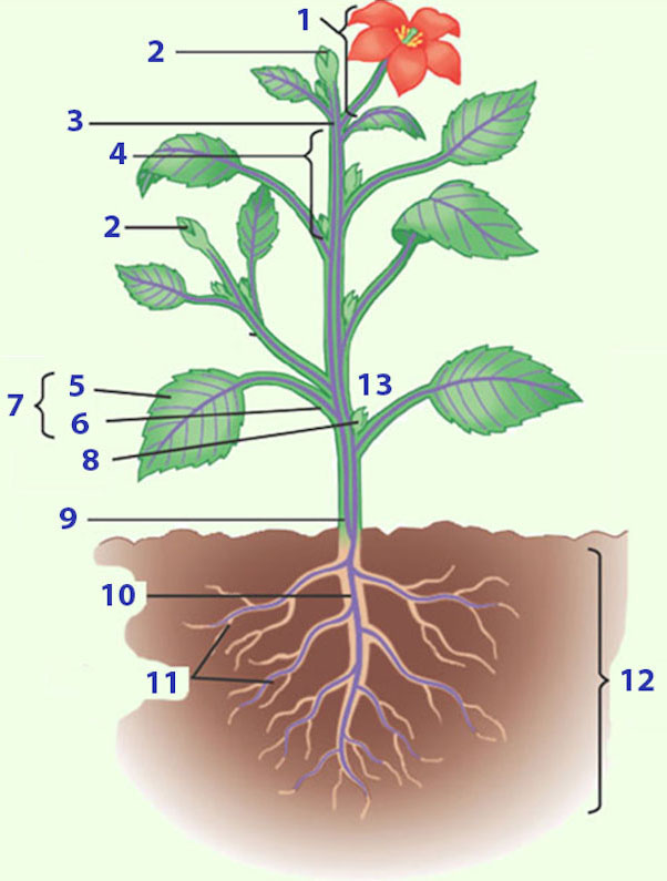 Biologie planten oefenen